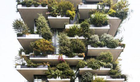 pejzažna arhitektura, botanika, bašta, cveće, hortikultura, kockice života, kockice zivota